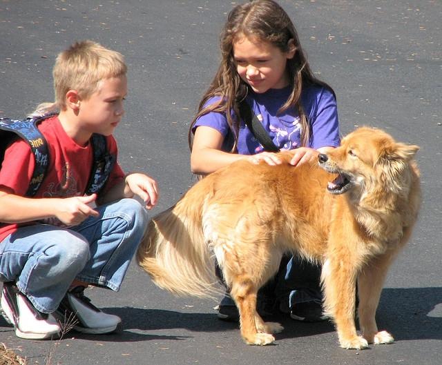 A kutyákkal felnövő gyermekeknél kisebb az asztma kialakulásának a kockázata