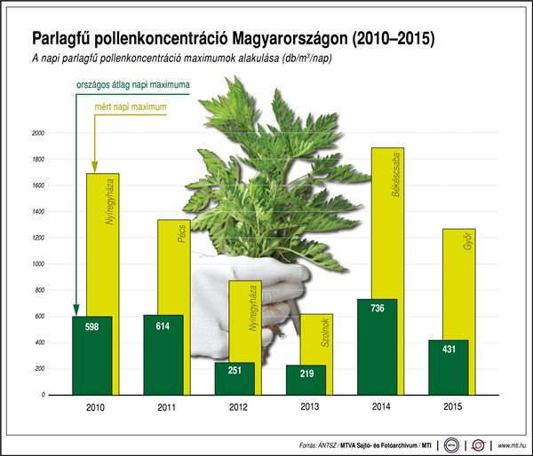 Parlagfű pollenkoncentráció Magyarországon (2010-2015)