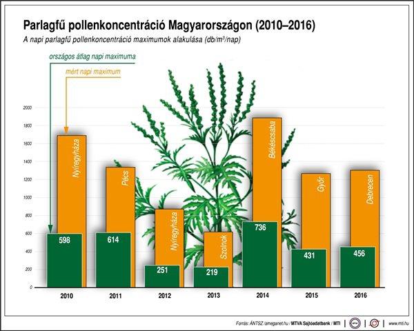 Parlagfű pollenkoncentráció Magyarországon (2010-2016)