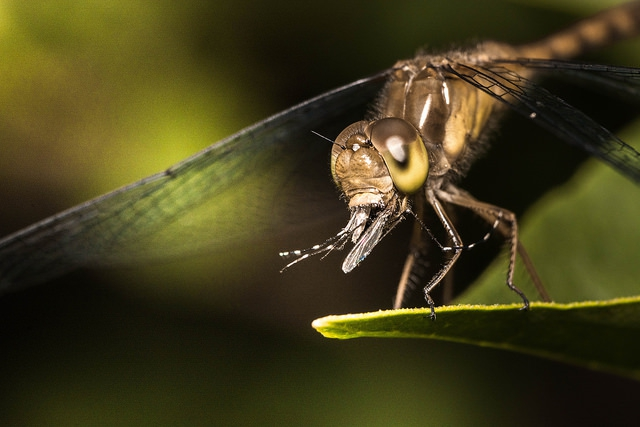 A Zikaláz miatt figyelmezteti a KKM a Brazíliába indulókat