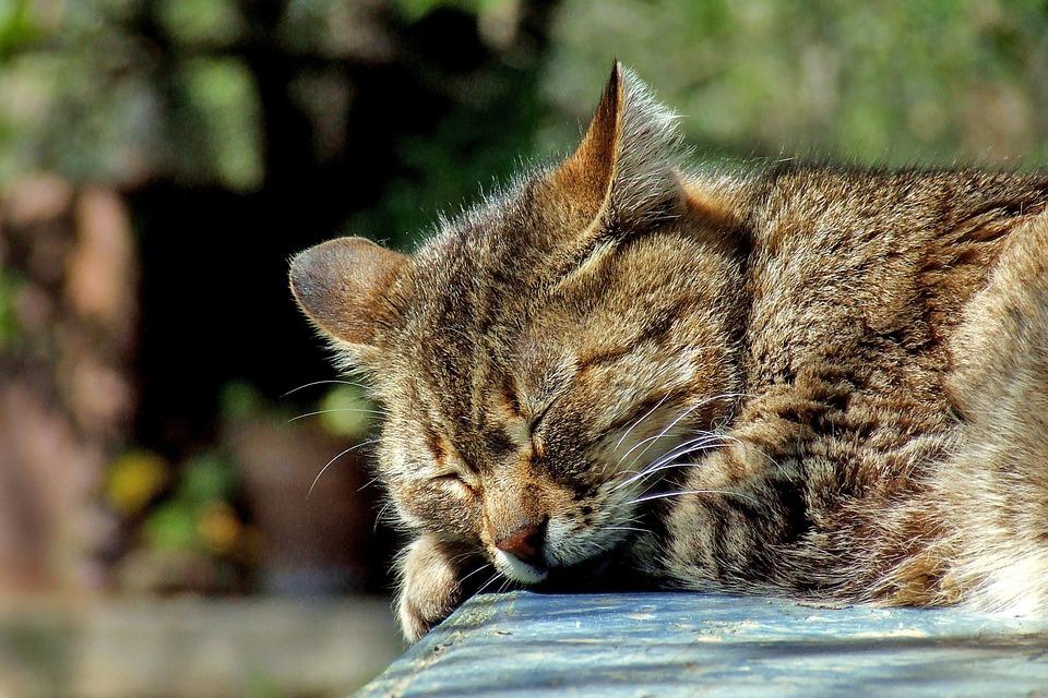 Akik 6 óra alvással is elvannak, veszélynek teszik ki magukat