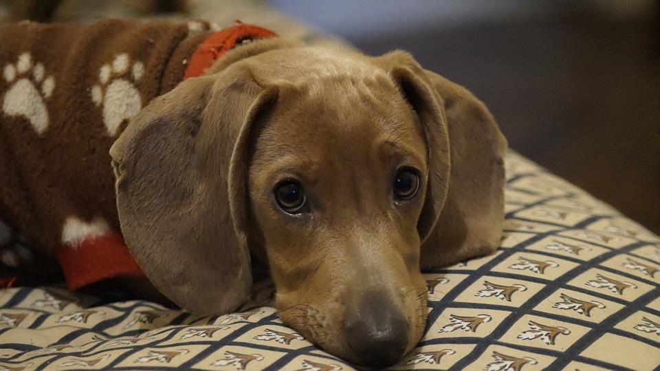 Kisebb az asztma kockázata a gyereknél, ha kutya van a háznál