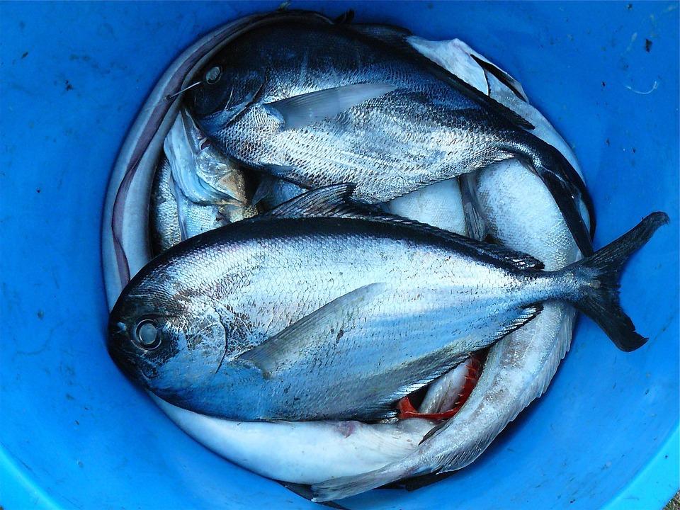 Az olajos halak csökkenthetik a cukorbetegekben a szembetegségek kockázatát