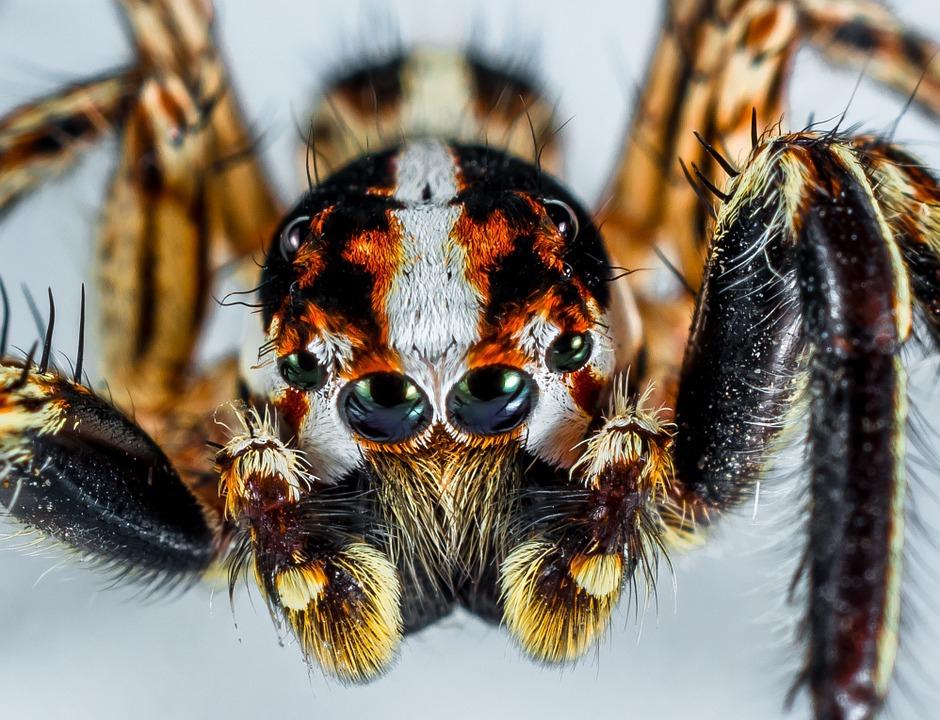 A régi emlékek helyére újak kerülnek terápia során, ha a pókoktól rettegünk