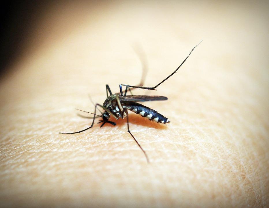 Az új malária elleni vakcina hatékonynak bizonyult a kísérletek során