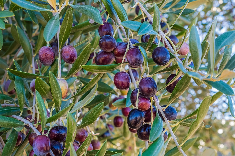 A mediterrán étrendben található egészséges zsíroktól nem hízik az ember