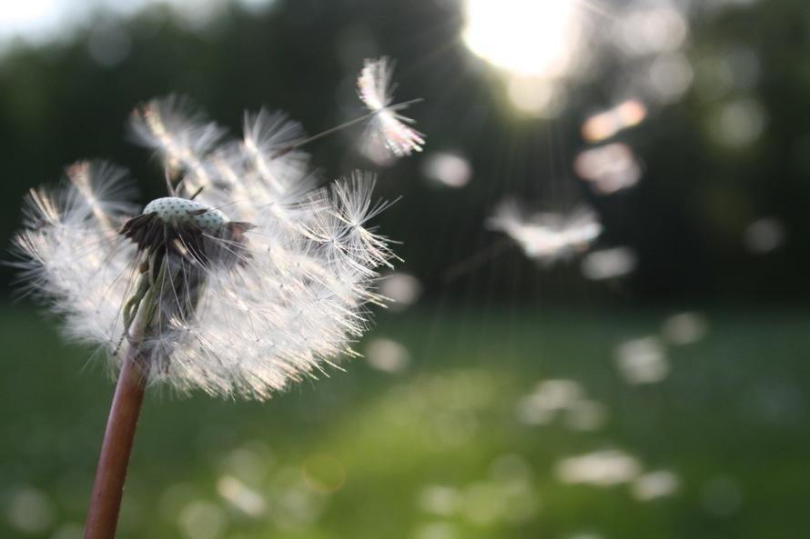 A szezonális allergiák nagyobb valószínűséggel betegítenek meg?