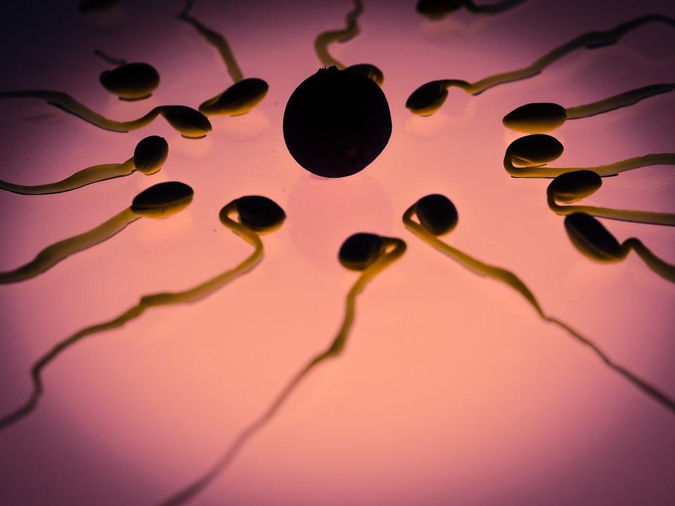 Kétszer nagyobb valószínűséggel csökken a napi egy órát mobiltelefonáló férfiak spermaminősége