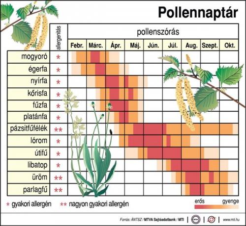 Pollennaptár (február-október)